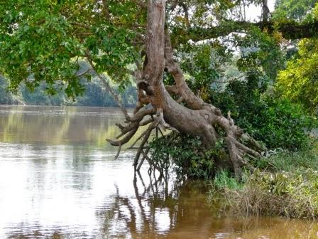 arbre-kadey-2